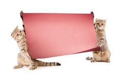 Twee katjes met aanplakbiljet of banner Stock Foto