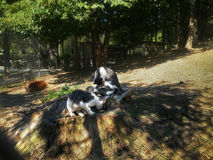 Twee katjes spelen en jagen in tuin Stock Afbeeldingen