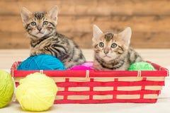 twee katjes van Bengaals ras zitten in een rieten mand royalty-vrije stock afbeeldingen