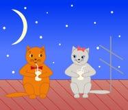 Twee katten. Stock Foto's