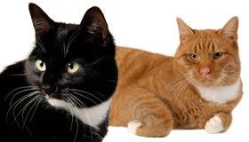 Twee katten Royalty-vrije Stock Afbeelding