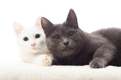 Twee Katten royalty-vrije stock foto
