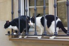 Twee katten a Royalty-vrije Stock Foto