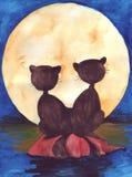 Twee katten Royalty-vrije Stock Afbeeldingen