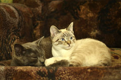 Twee Katten Royalty-vrije Stock Fotografie