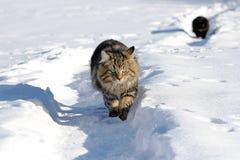 Twee katten in de sneeuw Stock Foto