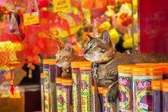 Twee katten die buiten een Hong Kong-opslag zitten Royalty-vrije Stock Foto's