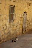 Twee katten die in een steeg liggen Stock Foto
