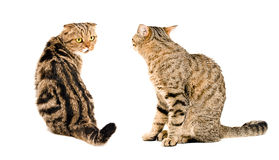 Twee katten, die elkaar bekijken royalty-vrije stock foto