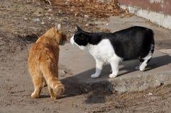 Twee katten die elkaar kussen Royalty-vrije Stock Foto's