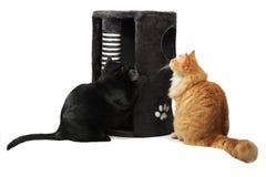 Twee katten die met kat spelen scratcher Royalty-vrije Stock Afbeelding