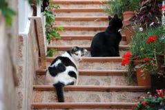 Twee katten die op de treden zitten Stock Afbeeldingen