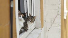 Twee katten die op het venster van een flatgebouw zitten die de camera bekijken Stock Afbeelding