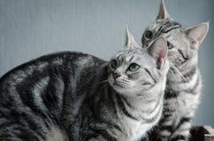 Twee katten die op oude houten plank zitten Stock Afbeeldingen
