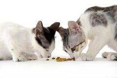 Twee katten die op witte achtergrond eten Stock Afbeelding