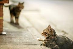 Twee katten in een avond, Hong Kong Royalty-vrije Stock Foto