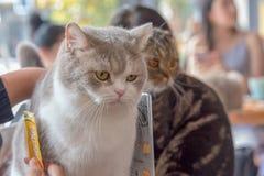 Twee Katten en Mensen Royalty-vrije Stock Foto's