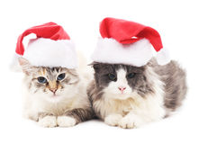 Twee katten in Kerstmishoeden Stock Afbeelding