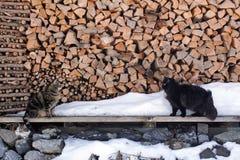 Twee katten komen vóór brandhout samen Stock Afbeeldingen