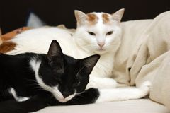 Twee katten liggen in bed stock afbeelding