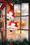 Twee katten met Kerstmankappen het lachen Stock Foto