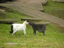 Twee katten ongeveer om te vechten royalty-vrije stock afbeelding