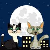 Twee katten op dak Royalty-vrije Stock Afbeelding