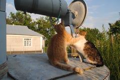 Twee katten op de put Stock Foto