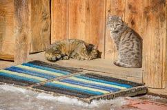 Twee katten op een drempel van een oud logboekhuis Stock Foto's