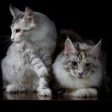 Twee katten op een lijst Stock Foto's