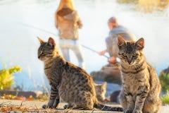 Twee katten op een visreis dichtbij een rivier Stock Afbeelding