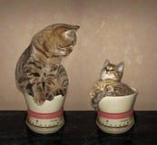 Twee katten op keukenschalen royalty-vrije stock afbeeldingen