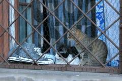 Twee katten op venster stock fotografie