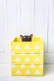 Twee katten, vader en zoonskatten bruin, chocoladebruin en grijs katje met grote groene ogen op de houten vloer op donkere whi al Stock Afbeelding