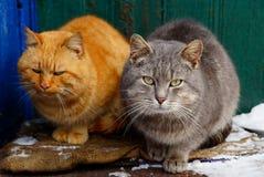 Twee katten zitten op de drempel dichtbij het huis Royalty-vrije Stock Foto