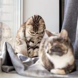 Twee katten zitten op de venstervensterbank door het venster, verminderde één droevig haar hoofd toe te schrijven aan het feit da royalty-vrije stock afbeeldingen