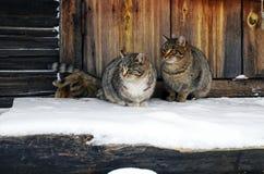 Twee katten zitten op een houten portiek Stock Foto's