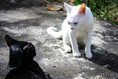 Twee kattenslag Stock Afbeeldingen
