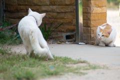 Twee kattenstrijd Stock Afbeelding