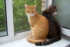 Twee kattenzitting op de venstervensterbank Stock Foto's
