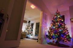 Twee Kerstbomen Stock Foto's