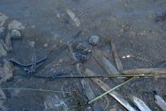 Twee Kikkers in het water Stock Afbeeldingen