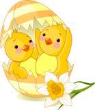 Twee kippen die van ei worden uitgebroed Royalty-vrije Stock Foto