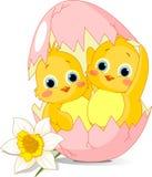 Twee kippen van Pasen die van ei worden uitgebroed Royalty-vrije Stock Afbeelding