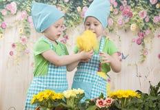 Twee klein aanbiddelijk meisjesspel met gele kuikens Stock Foto's