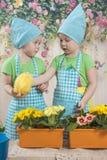 Twee klein aanbiddelijk meisjesspel met gele kuikens Royalty-vrije Stock Foto