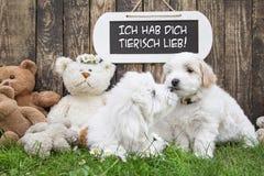 Twee kleine babyhonden die kussen: grappige groetkaart voor huwelijk of Stock Foto