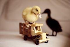 Twee kleine eenden en houten stuk speelgoed auto Stock Afbeelding