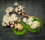 Twee kleine eieren in zij uiterst kleine groene nesten met het ontspannen bloemen  Royalty-vrije Stock Afbeeldingen