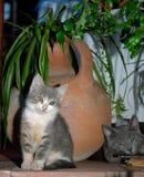 Twee kleine grijze katten en een traditionele waterpot in een werf in Kak Stock Afbeelding
